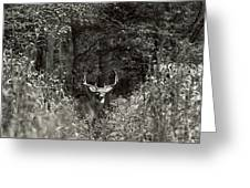 A Big Buck In Rut Greeting Card