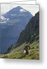 A Bighorn Sheep Ram, Ovis Canadensis Greeting Card