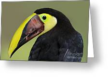 A Bird For His Bill.. Greeting Card