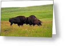 A Bison Brawl Greeting Card