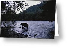 A Black Bear Searches For Sockeye Greeting Card