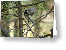 A Black Capped Chickadee Taking Off Greeting Card