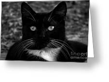A Black Cat's Life -florida Greeting Card