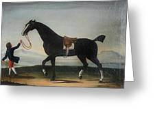 A Black Horse Held By A Groom Greeting Card