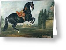 A Black Horse Performing The Courbette Greeting Card