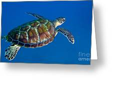 A Black Sea Turtle Off The Coast Greeting Card by Michael Wood