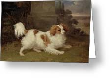 A Blenheim Spaniel Greeting Card by William Webb