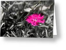 A Bloom Of Color Greeting Card