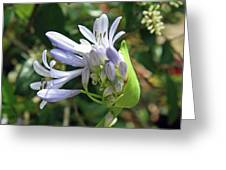 A Blooming Bud Greeting Card