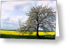A Blooming Tree In A Rapeseed Field Greeting Card