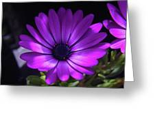 A Blue Bloomer  Greeting Card