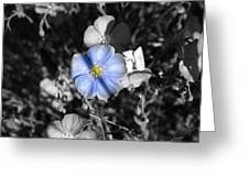 A Blue Flax Special Greeting Card