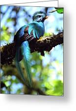 A Blue Stand Out Greeting Card