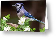 A Bluejay Bouquet Greeting Card