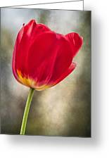 A Bold Red Embrace Greeting Card