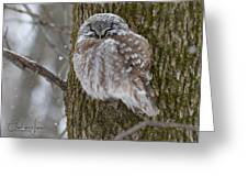 A Boreal Owl Under Snow Photograph by Charlaine Jean on saw-whet owl house, great horned owl house, barred owl house, eastern screech owl house, western screech owl house,