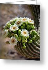 A Bouquet Of Saguaro Blossoms Greeting Card