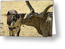 A Bovine Love Greeting Card