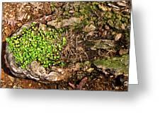 A Bowl Of Greens Greeting Card
