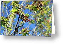 A Branch Standing Out From The Crowd Greeting Card
