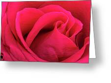A Bright Pink Rose Close-up Greeting Card
