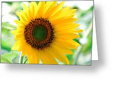 A Bright Yellow Sunflower Greeting Card
