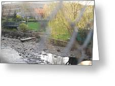 A Brook In The Bronx Greeting Card