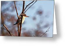 A Brown-hooded Kingfisher  Greeting Card