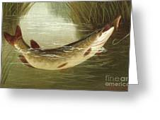 A Brown Trout Coming To The Gaff  Greeting Card