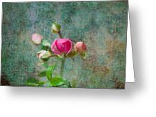 A Bud - A Rose Greeting Card