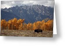 A Buffalo Grazing In Grand Teton Greeting Card