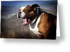 A Bulldog's Mighty Yawn Greeting Card