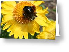 A Bumble Greeting Card