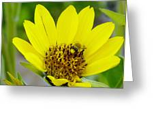 A Bumble Hunkering Down Greeting Card