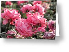 A Bunch Of Pink Greeting Card