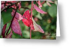 A Bunch Of Red Leaves Greeting Card