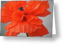 A Burns Poppy Greeting Card