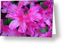 A Burst Of Pink Greeting Card