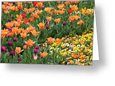 A Burst Of Spring Color Greeting Card