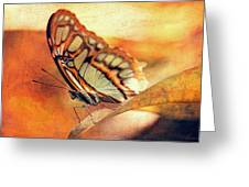 A Butterfly On A Leaf  Greeting Card