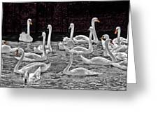 A Cacophony Of Swans Greeting Card