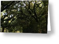 A Canopy Of Trees Greeting Card