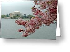 A Capital Cherry Blossom II Greeting Card