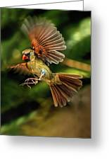 A Cardinal Approaches Greeting Card