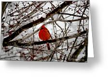 A Cardinal In Winter Greeting Card