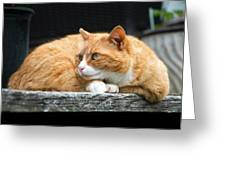 A Cat Named 'kitty' Greeting Card