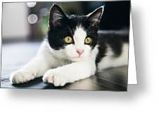 A Cat With Black And White Fur Greeting Card