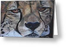 A Cheetah Greeting Card