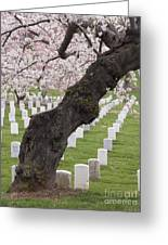 A Cherry Tree In Arlington National Cemetery Greeting Card