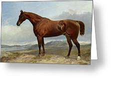 A Chestnut Hunter In A Landscape Greeting Card
